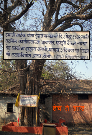 Tree where Umaji Naik was hanged